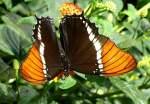 Name gesucht/4380/schmetterling-am-21062008-in-wilhelmastuttgart Schmetterling am 21.06.2008 in Wilhelma/Stuttgart