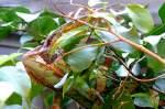 Chamaleon/52761/chamaeleon-am-12112008-in-wilhelmastuttgart Chamäleon am 12.11.2008 in Wilhelma/Stuttgart