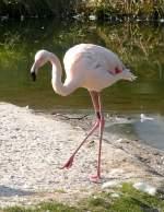 flamingos/18368/flamingo-am-22032009-in-wilhelmastuttgart Flamingo am 22.03.2009 in Wilhelma/Stuttgart